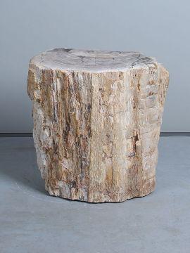Fossiles Holz PJ-31