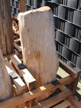 versteinertes Holz C86