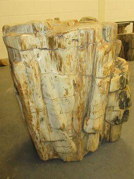 versteinertes Holz C11