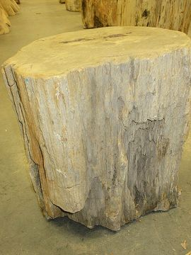 Fossiles Holz C18