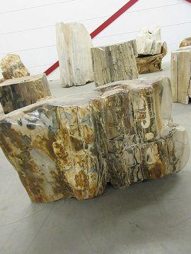 versteinertes Holz C33