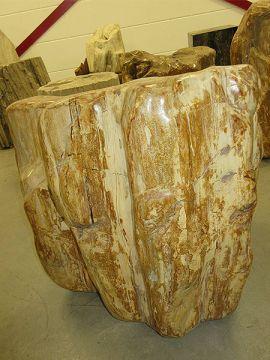 versteinertes Holz C40