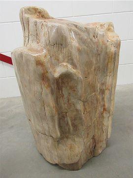 versteinertes Holz C54