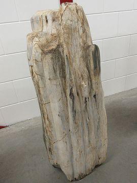Fossiel hout C57