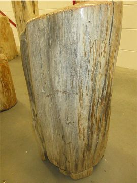 Fossiles Holz C61