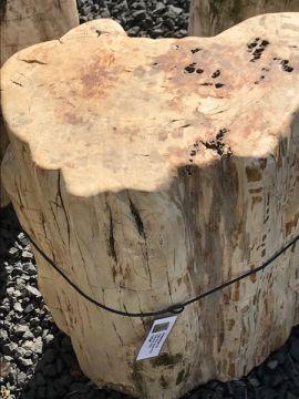 versteinertes Holz C21