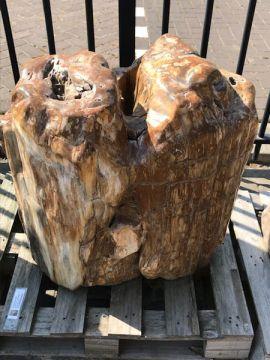 versteinertes Holz C68