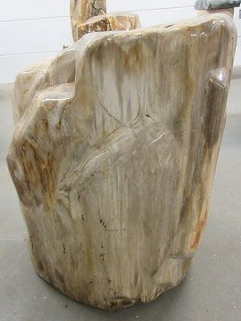 Fossiles Holz C24