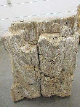 versteinertes Holz C27
