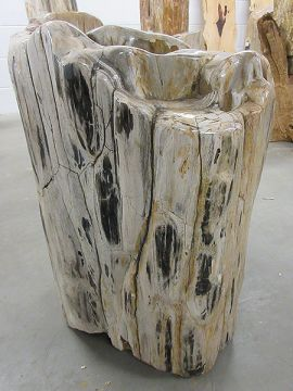 Fossiles Holz C58