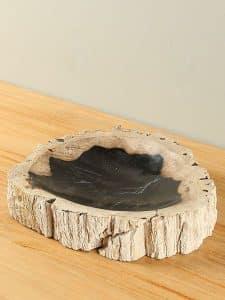 Plateau Fossiles Holz F-1