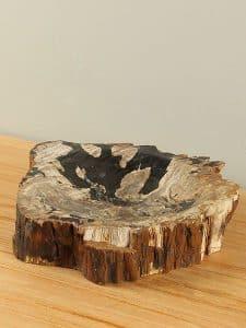 Plateau Fossiles Holz F-7