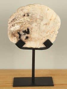Fossiles Holz auf Standfuß PJ-12