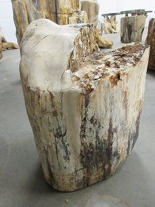 Fossiles Holz C10