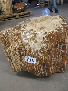 Fossiles Holz C16