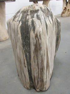 versteinertes Holz C19