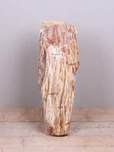 versteinertes Holz YS-36