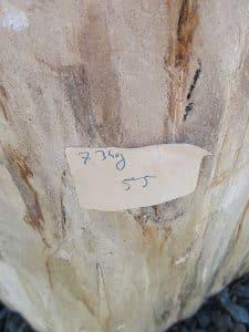 versteinertes Holz 55