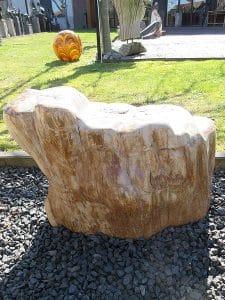 versteinertes Holz C23