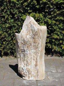 fossil Holz PU-15