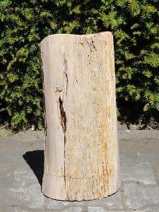versteinertes Holz PU-22