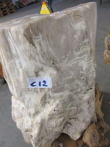 Fossiles Holz C12