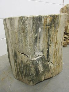 Fossiles Holz C28