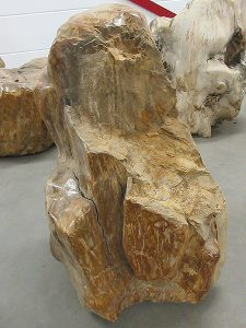 Fossiles Holz C50