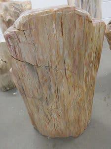 versteinertes Holz C56