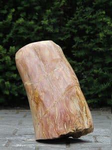 versteinertes Holz VH-6A
