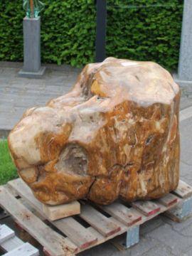 Fossiel hout C71, 62 cm