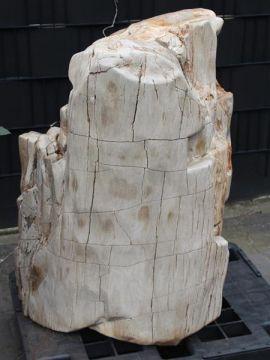 versteinertes Holz C70