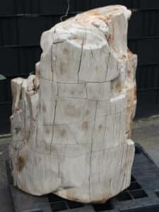 versteend hout c70-1