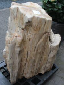 versteend hout c70-2